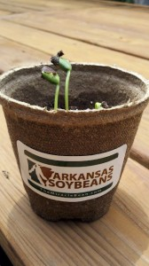 arkansas soybeans