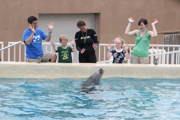 Gulf World Dolphin Meet and Greet